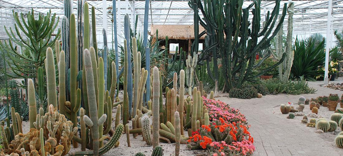 Cactus Oase Ruurlo Belevingspark